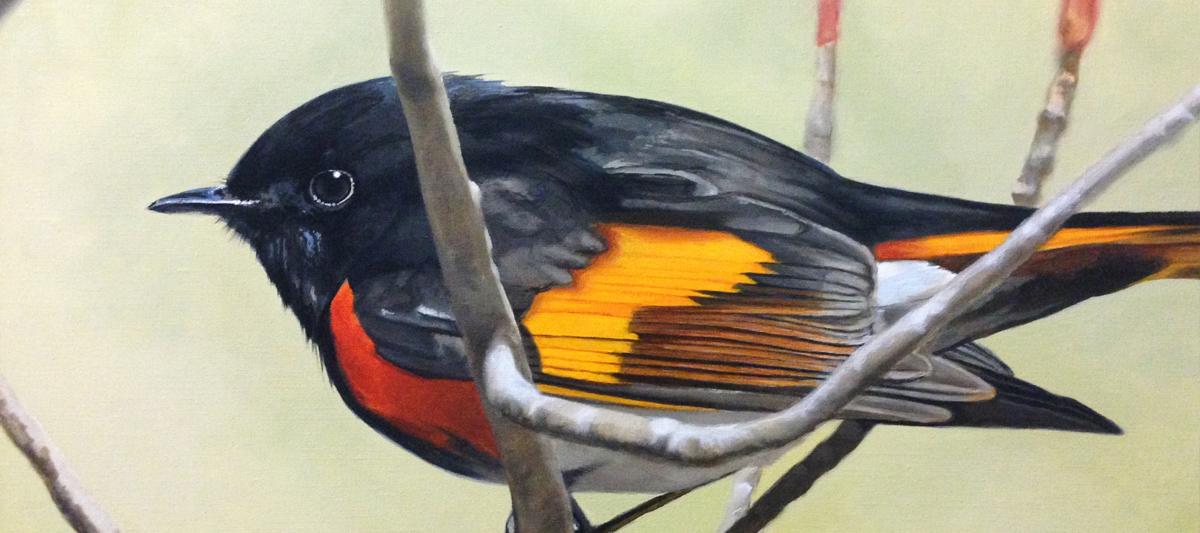 birdsoncanvas_slider